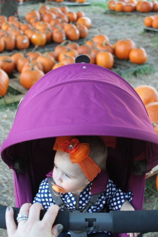 family fun, pumpkin patch, stokke scoot review, stokke scoot,compact stroller