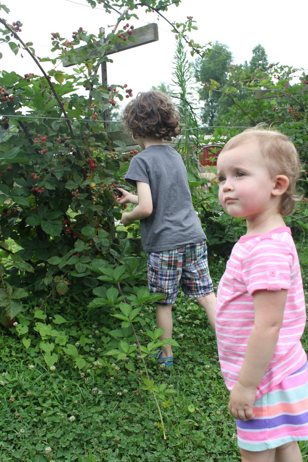 pickingberries