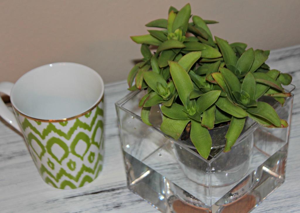plantcube