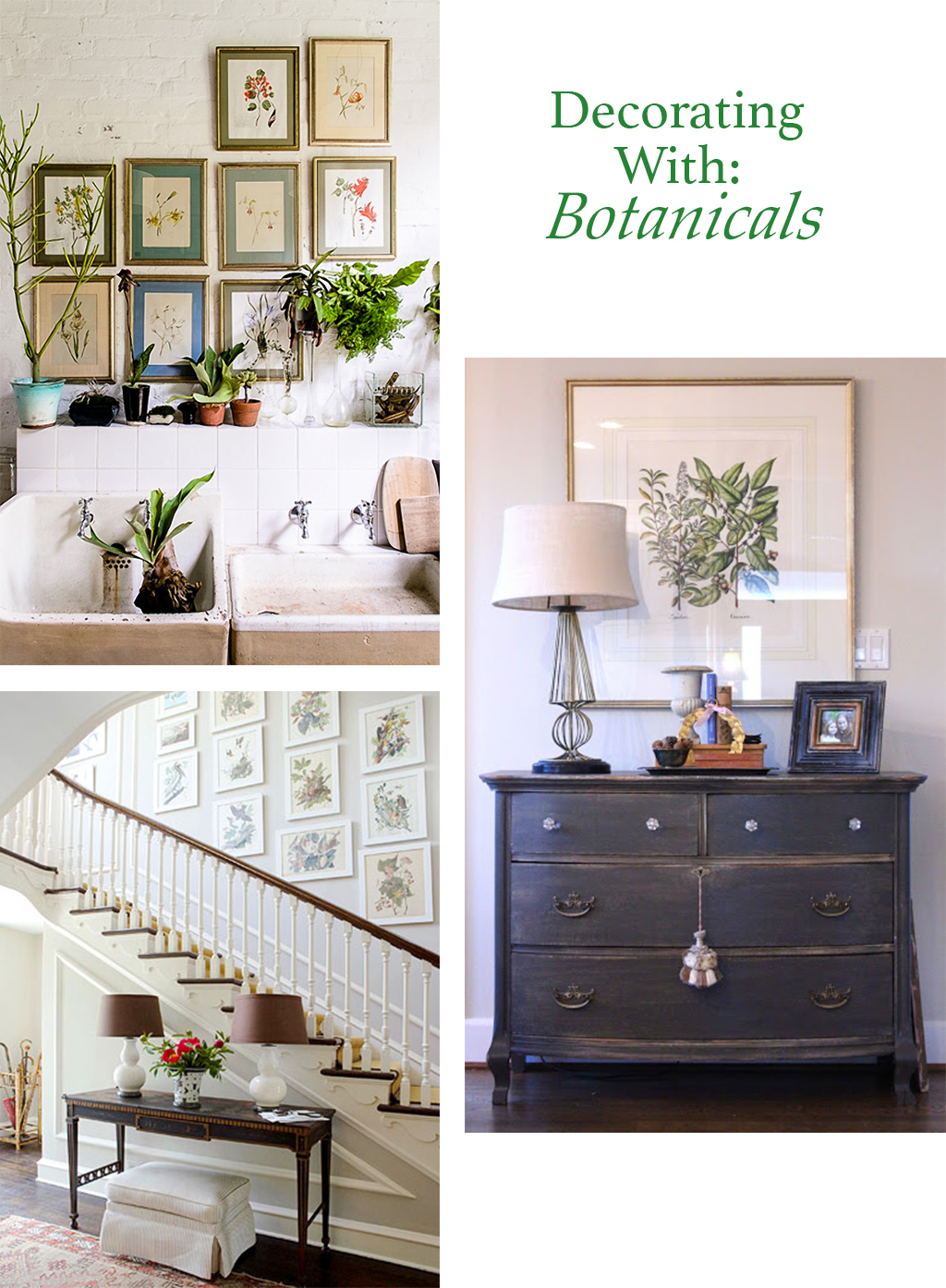 Decorating with Botanicals