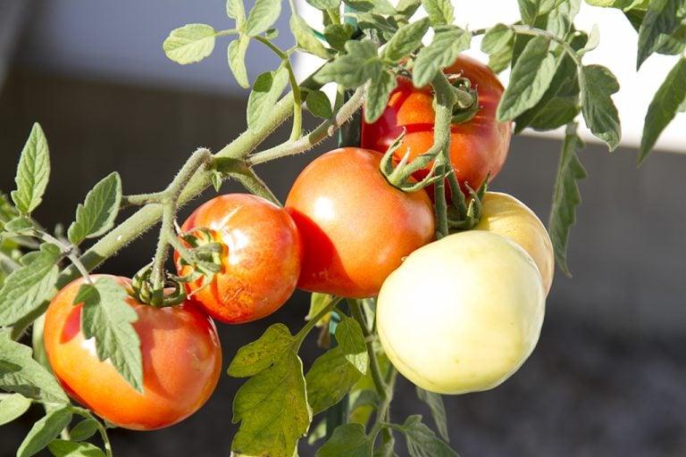 My Super Simple Summer Gardening Tips