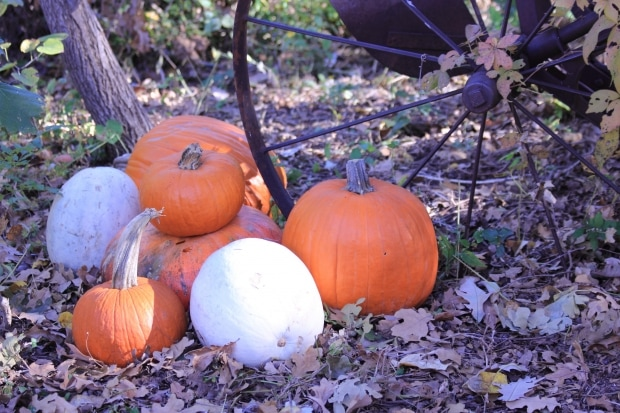 7 Tips for Planning the Perfect Pumpkin Patch Trip
