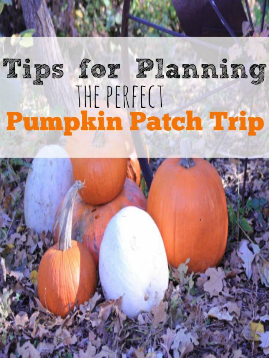 Pumpkin Patch (1)