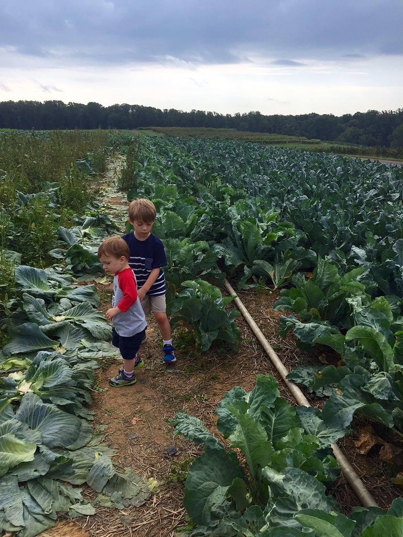 Brocolli Picking