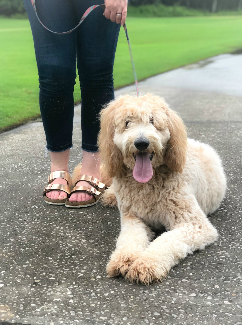 woman and goldendoodle on golf course