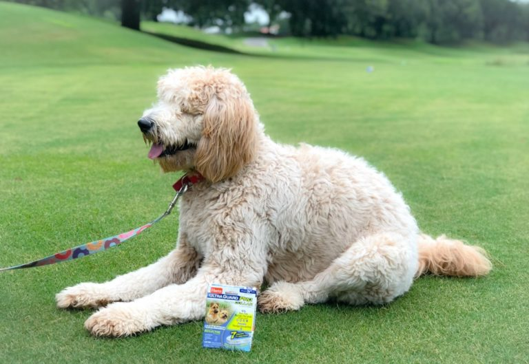 How to Protect Your Pet for Summer Adventures
