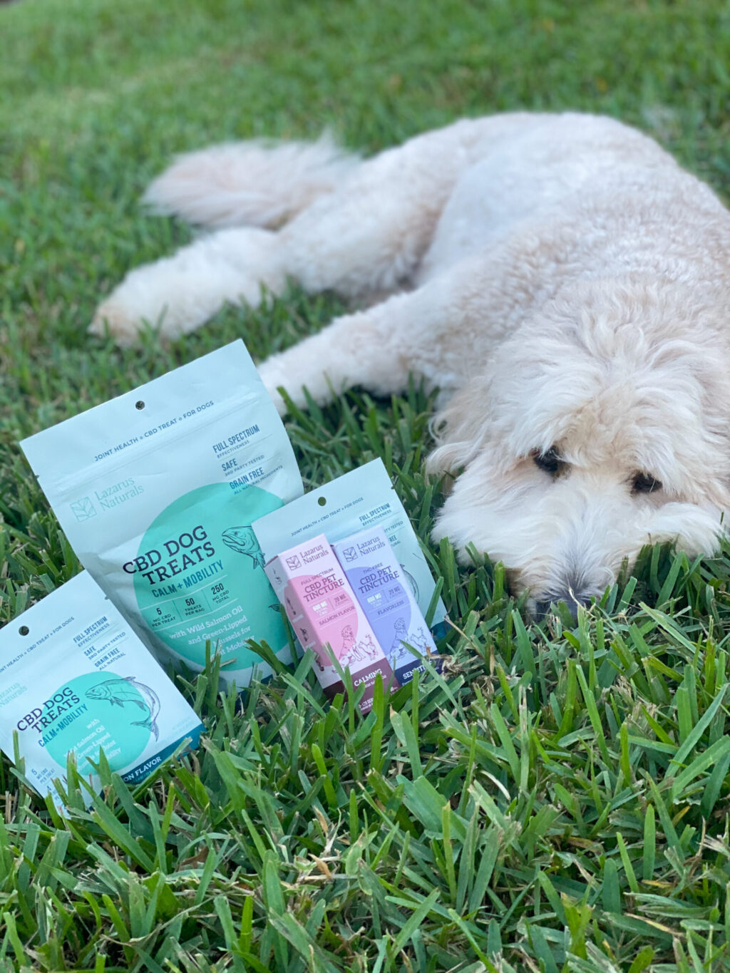 white goldendoodle lying in grass next to bags and bottles of cbd produts