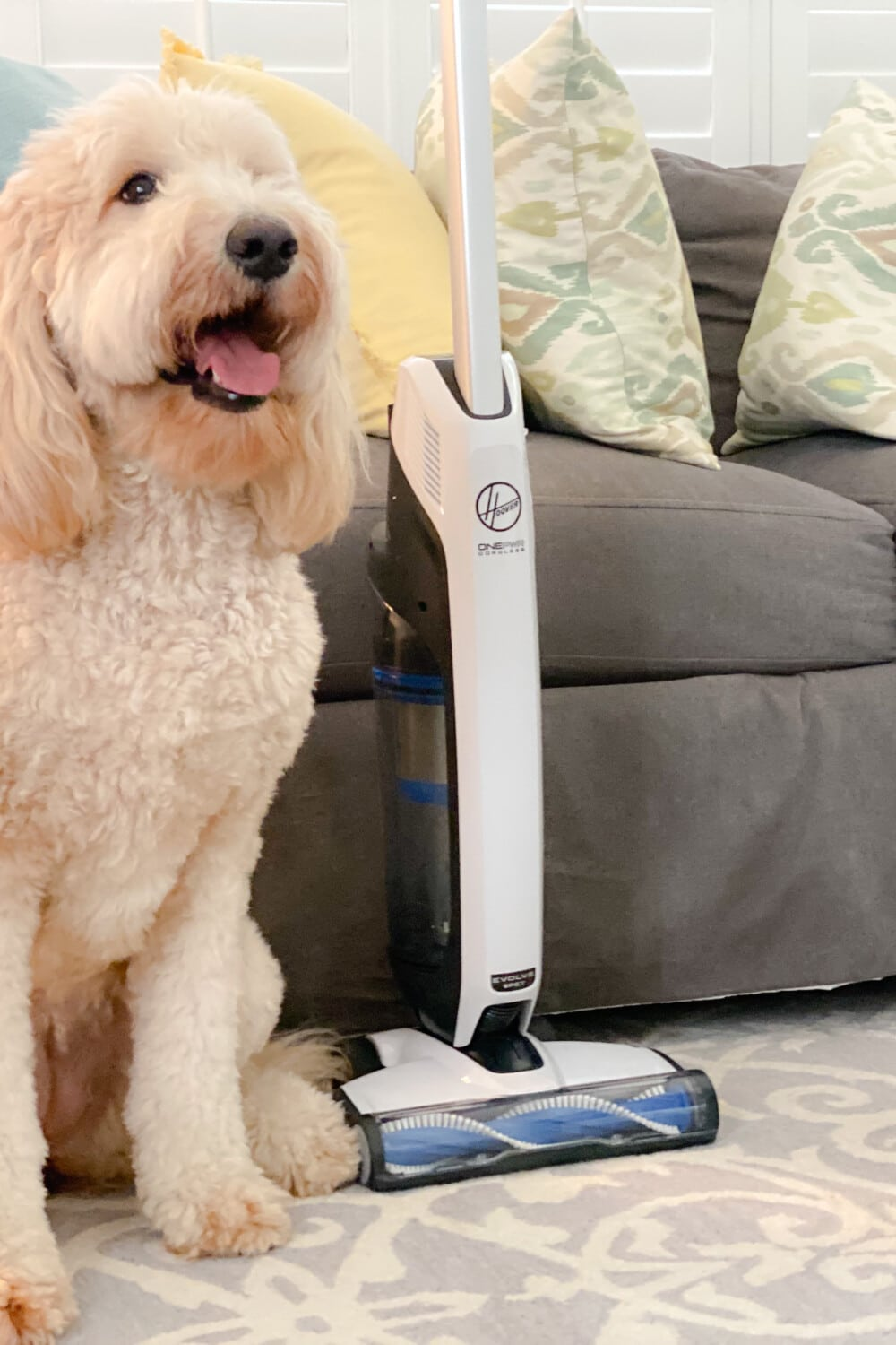 white goldendoodle in front of gray couch next to white stick vacuum