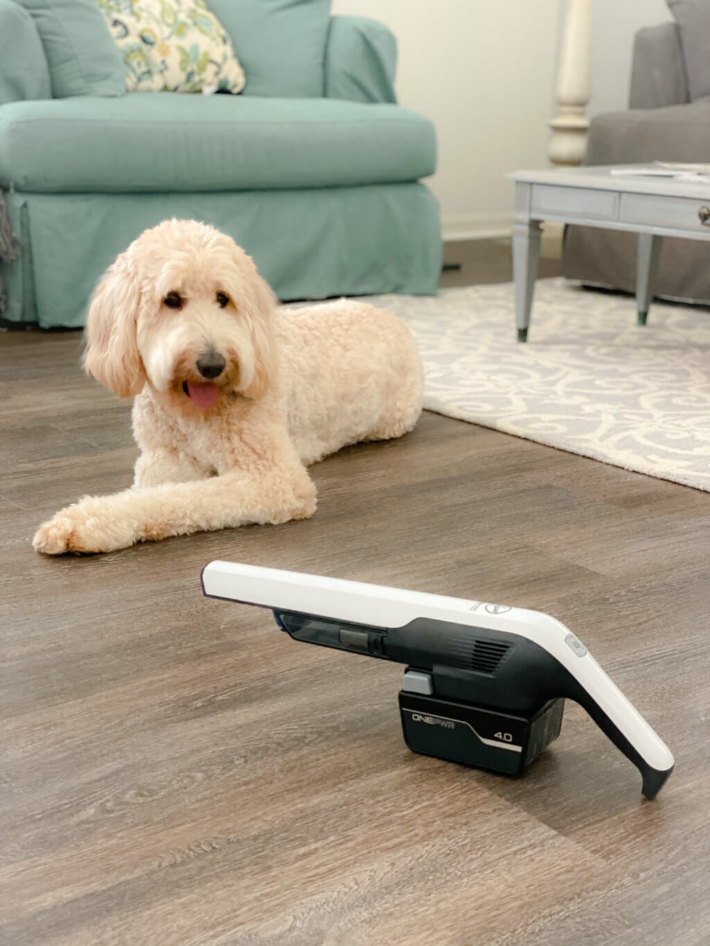 white goldendoodle sitting on wood floor in front of white handheld vacuum